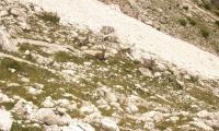 alta-via-dolomiti-4-0106-sercant-2012.jpg