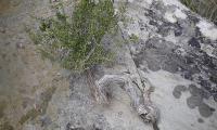 canyon-de-mortix-0004-sercant-2012.jpg