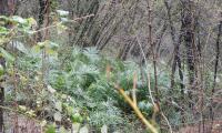 valle-lesine-0010-sercant-2013-.jpg