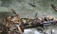 clue-da-la-maglia-0020-sercant-2012.jpg